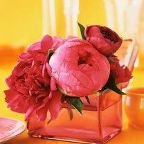 dekoracje weselne - piwonie