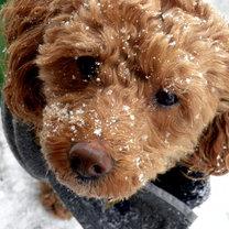 pies zimą