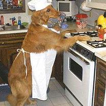 Pies w kuchni