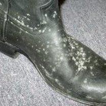 zapleśniałe buty