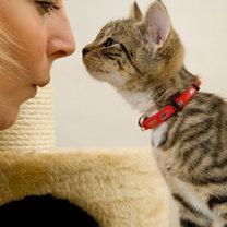 kochający kotek