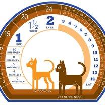wiek kota - tabela