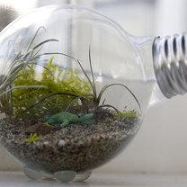 terrarium z żarówki