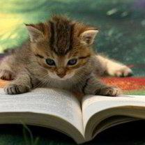 Kot czyta książkę