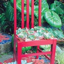 doniczka z krzesła