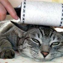 pozbywanie się sierści z kota ;))