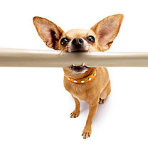 Pies z kością