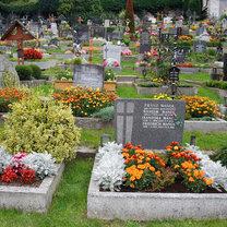 Rośliny na cmentarzu