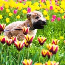 Pies wiosną