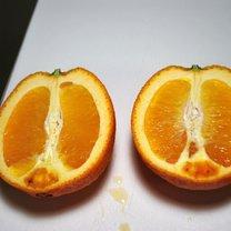 Galaretka z wódką w pomarańczy 1