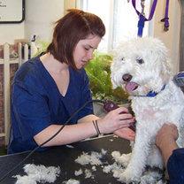 fryzjer dla psa