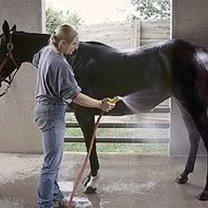 Mycie konia