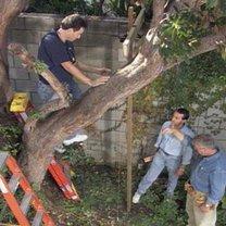 Domek na drzewie 1