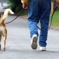 Wyprowadzanie psa na spacer
