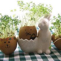 rzeżucha w jajkach