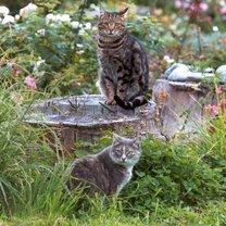 Koty w ogrodzie