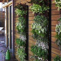 Pionowy ogród na ścianach domu