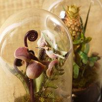 kwiaty w wosku