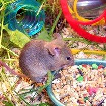 myszka w klatce