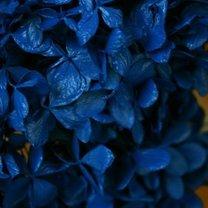 farbowanie kwiatów - krok 3