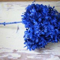 farbowanie kwiatów - krok 4