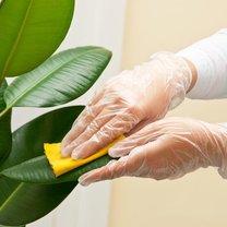 czyszczenie liści roślin