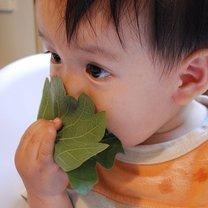 zatrucie liśćmi rośliny