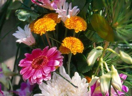 Jakie Kwiaty Na Cmentarz Wybrać Porada Tipypl