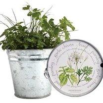 Mini ogródek ziołowy