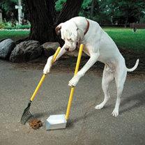 Pies sprząta za sobą kupę