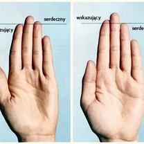 porównanie długości palców