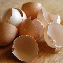 Skorupki z jaj
