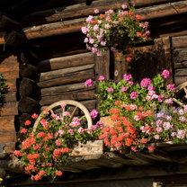 Dekoracje w ogrodzie wiejskim