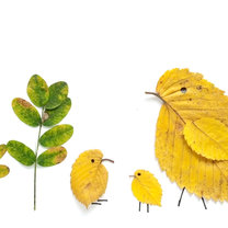 Kurczaczki z liści