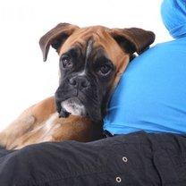 Pies a ciąża