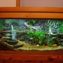 Akwarium dla żółwia wodno lądowego
