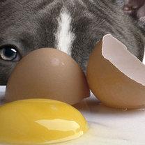 surowe jajko