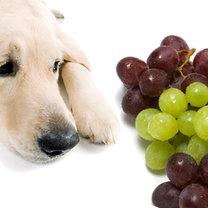 rodzynki i winogrona