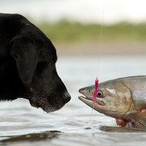 surowa ryba