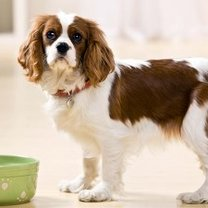 Dieta dla psa alergika