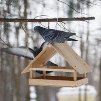 Karmnik dla ptaków 11
