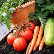 warzywa z ogródka