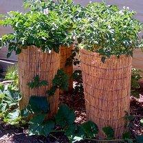 Wieża do uprawy ziemniaków