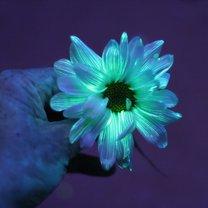 świecący kwiatek