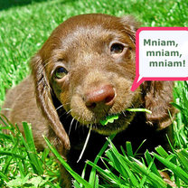 Pies je trawę