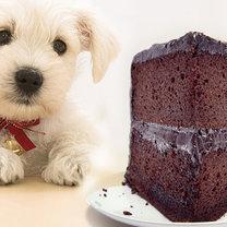 pies i słodycze