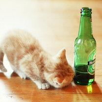 kot i alkohol