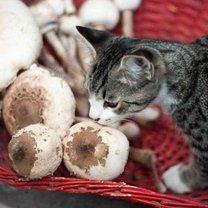 kot i grzyby