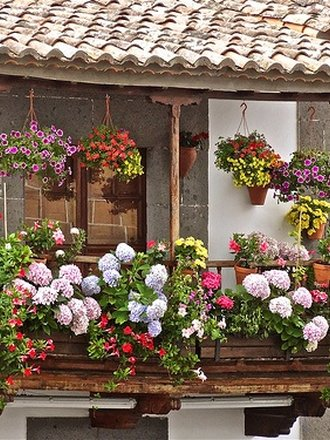 7 Roślin Na Słoneczny Balkon Porada Tipypl