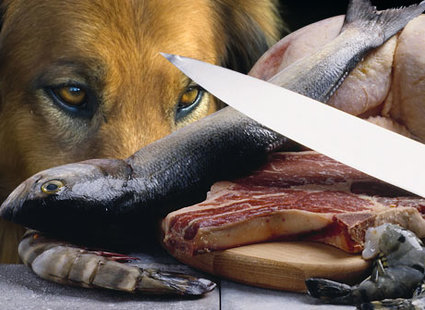 pies i surowe mięso